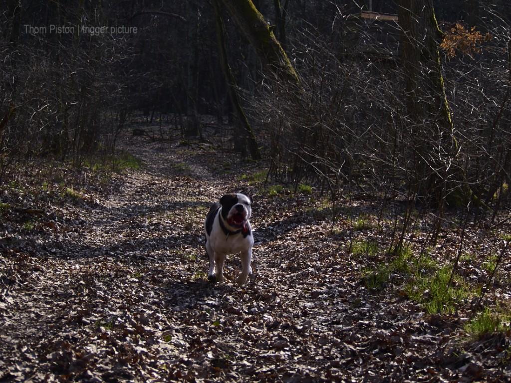 olde british bulldog