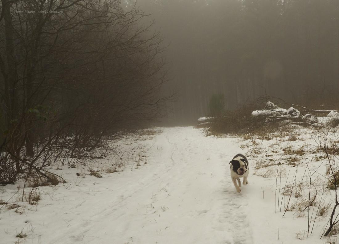 nebel, bulldogge und wald