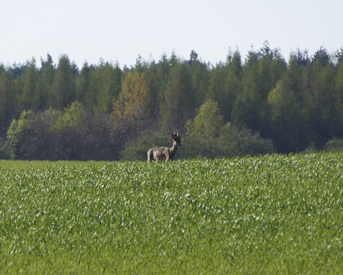 rehe am dakota home