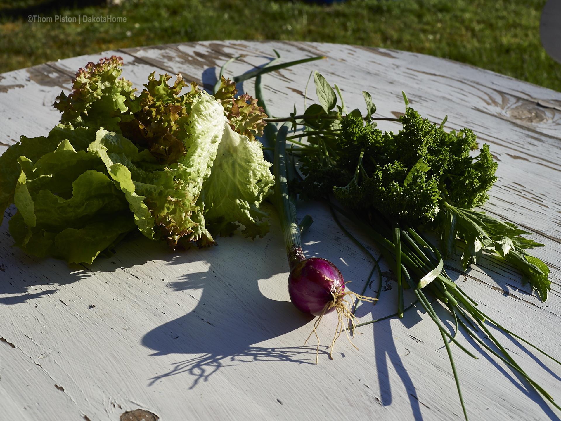 Zwieblen, Salat, Kräuter aus dem Dakota Home