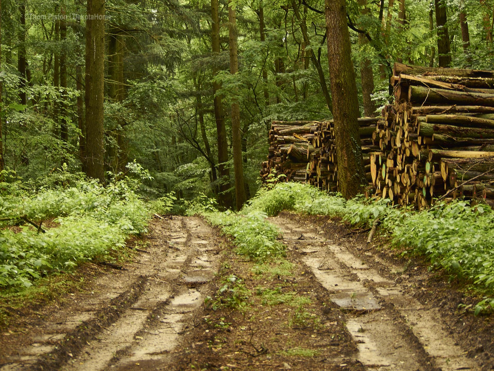 Wald incl. geschlagenem Holz