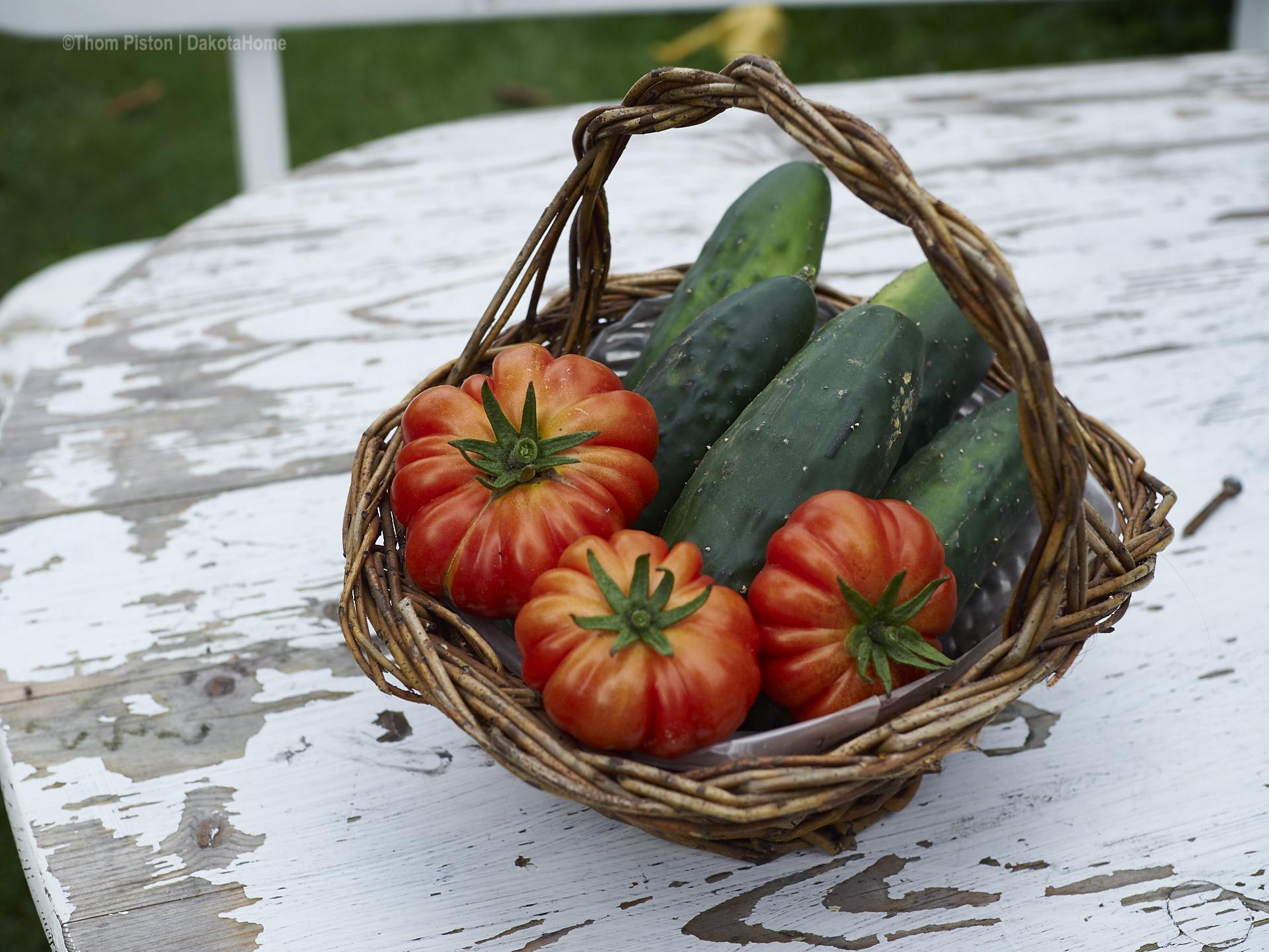 tomaten und gurken aus dem dakota home