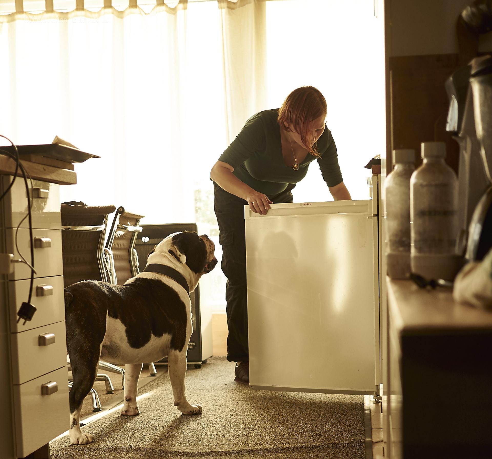alwin the olde british bulldog muss natuerlich auch die ordnung im kühlschrank im auge behalten..