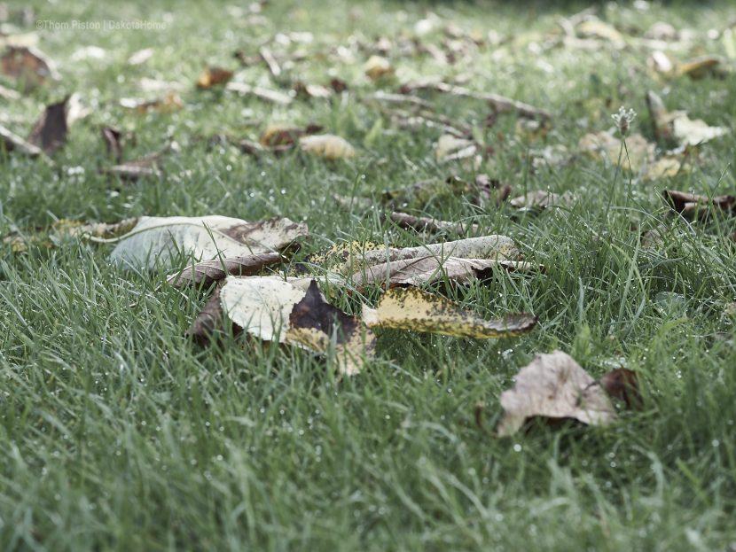 mitte august, herbst at dakota home