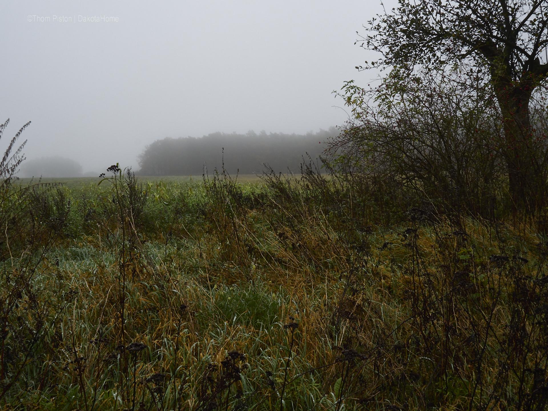 Ende Oktober, jeden Morgen nass und Nebel