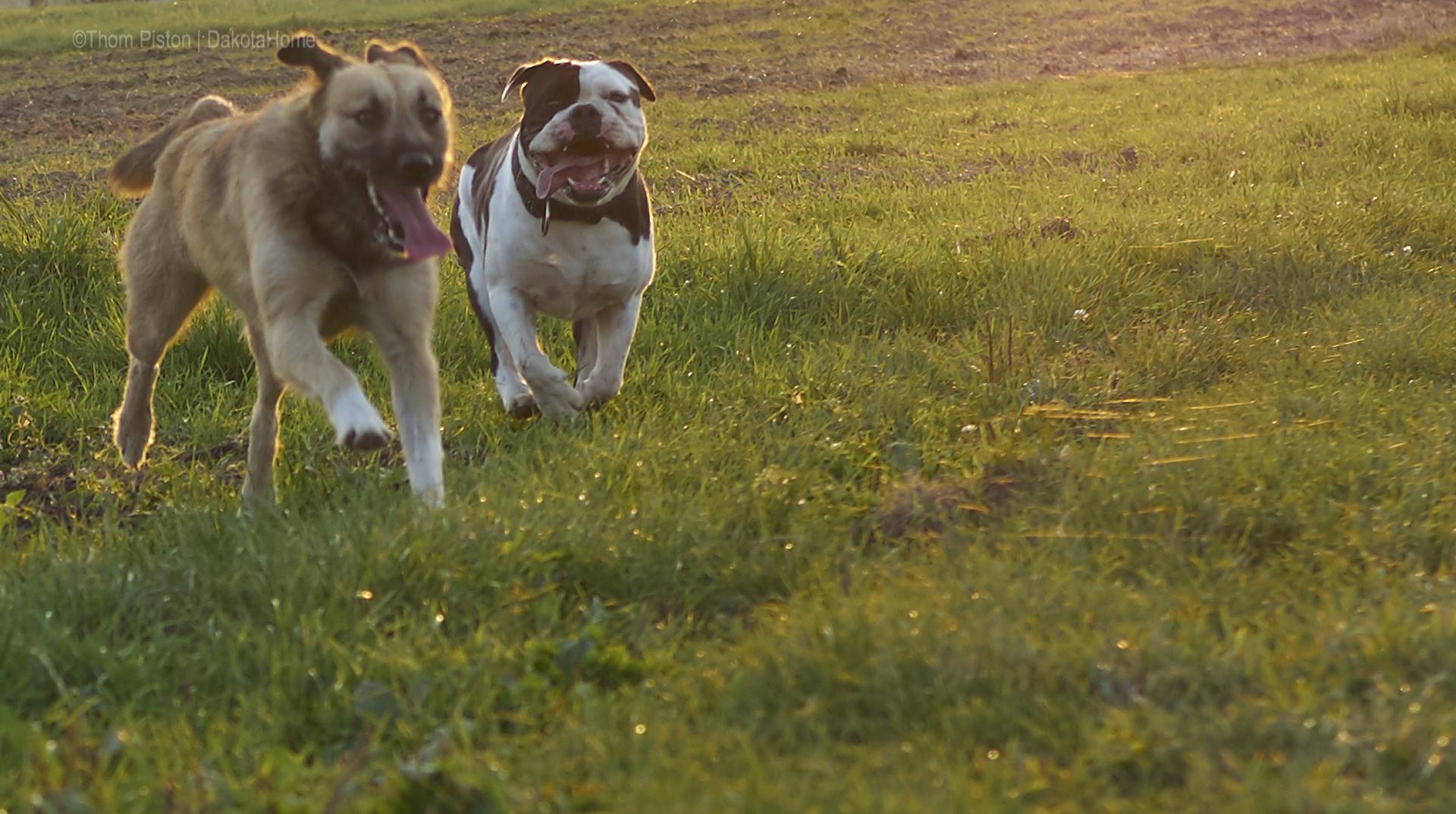 grosse hundeliebe
