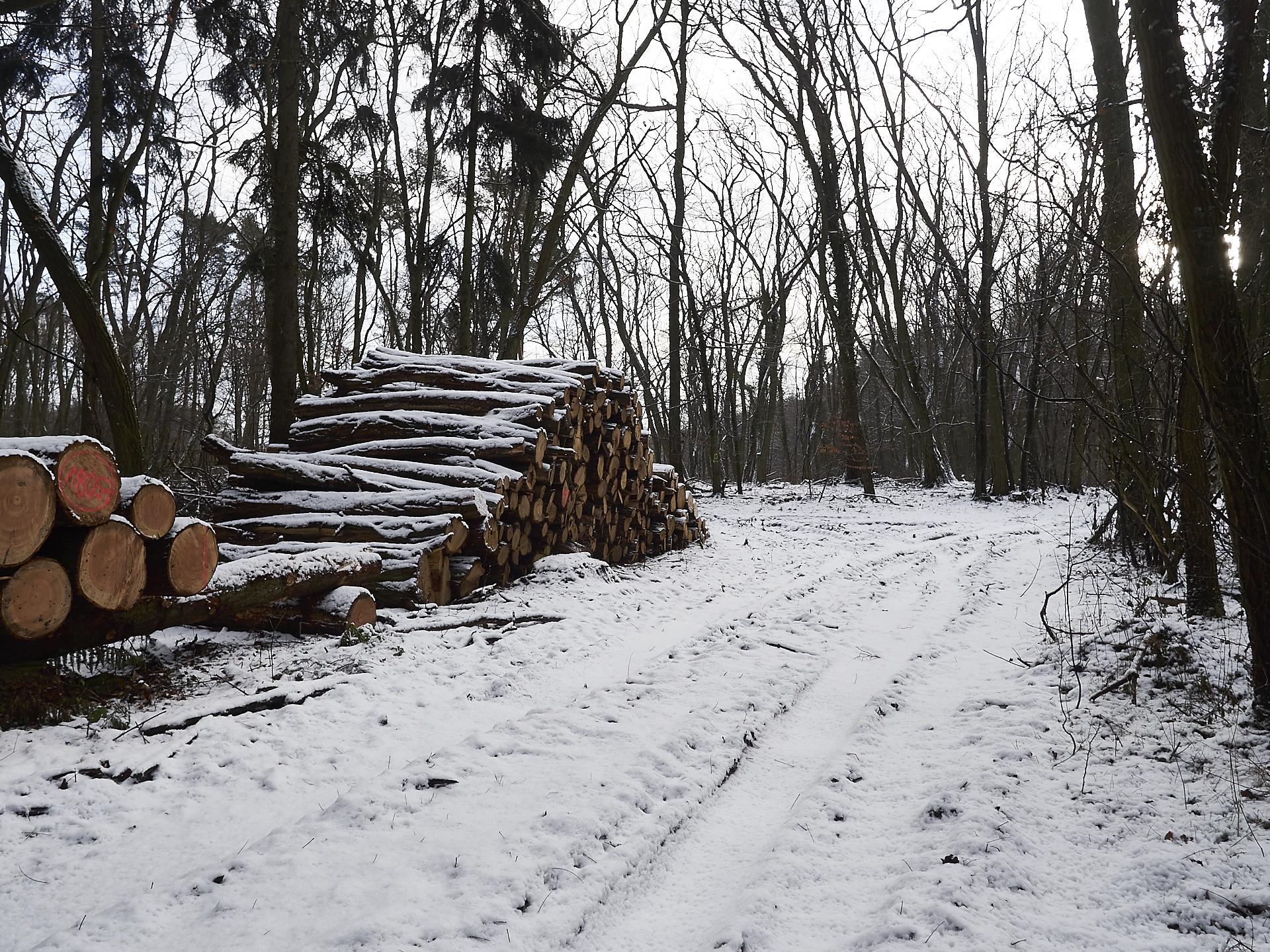 Tage mit Schnee, schöne spaziergänge