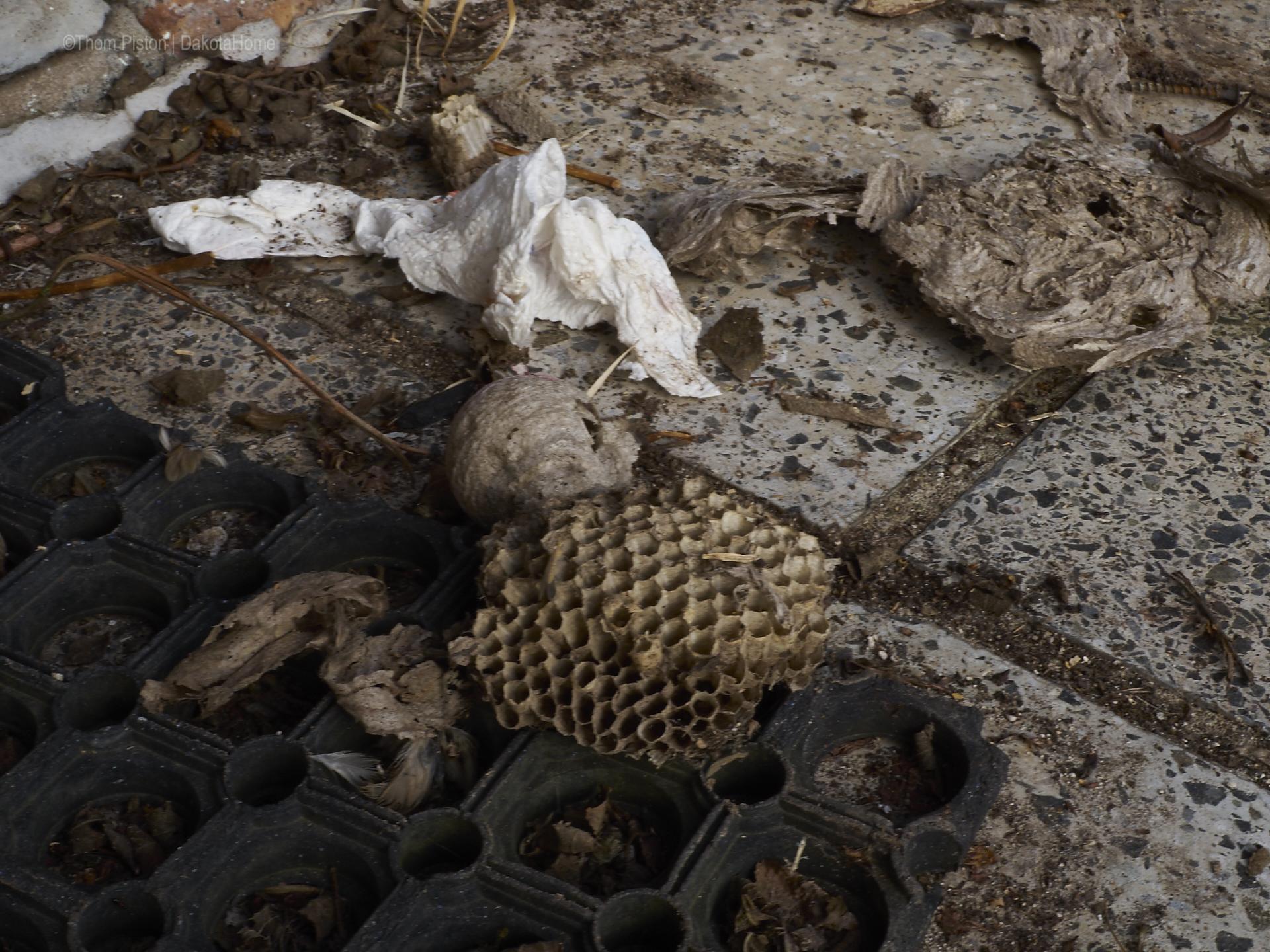 Bienennest..der Horror für jeden Laubenbesitzer