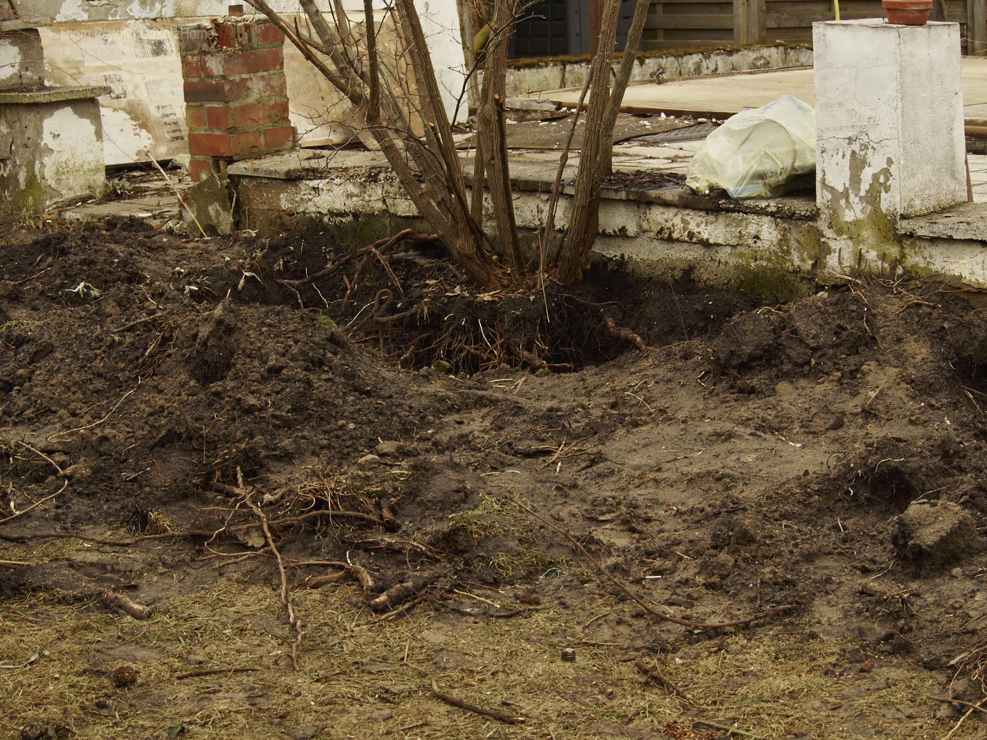 Rosen ausgraben at dakotahome