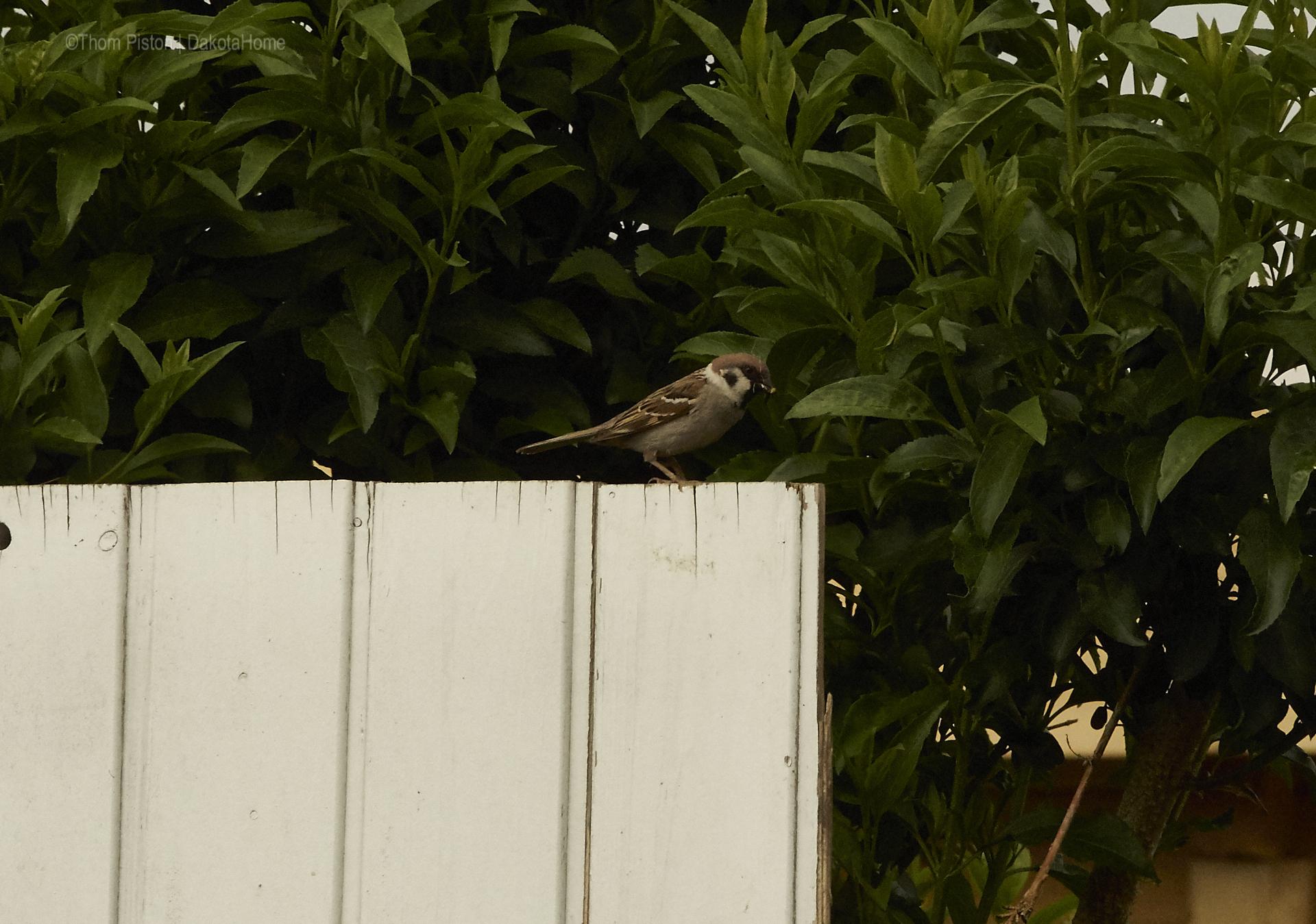 Vögel at Dakota Home