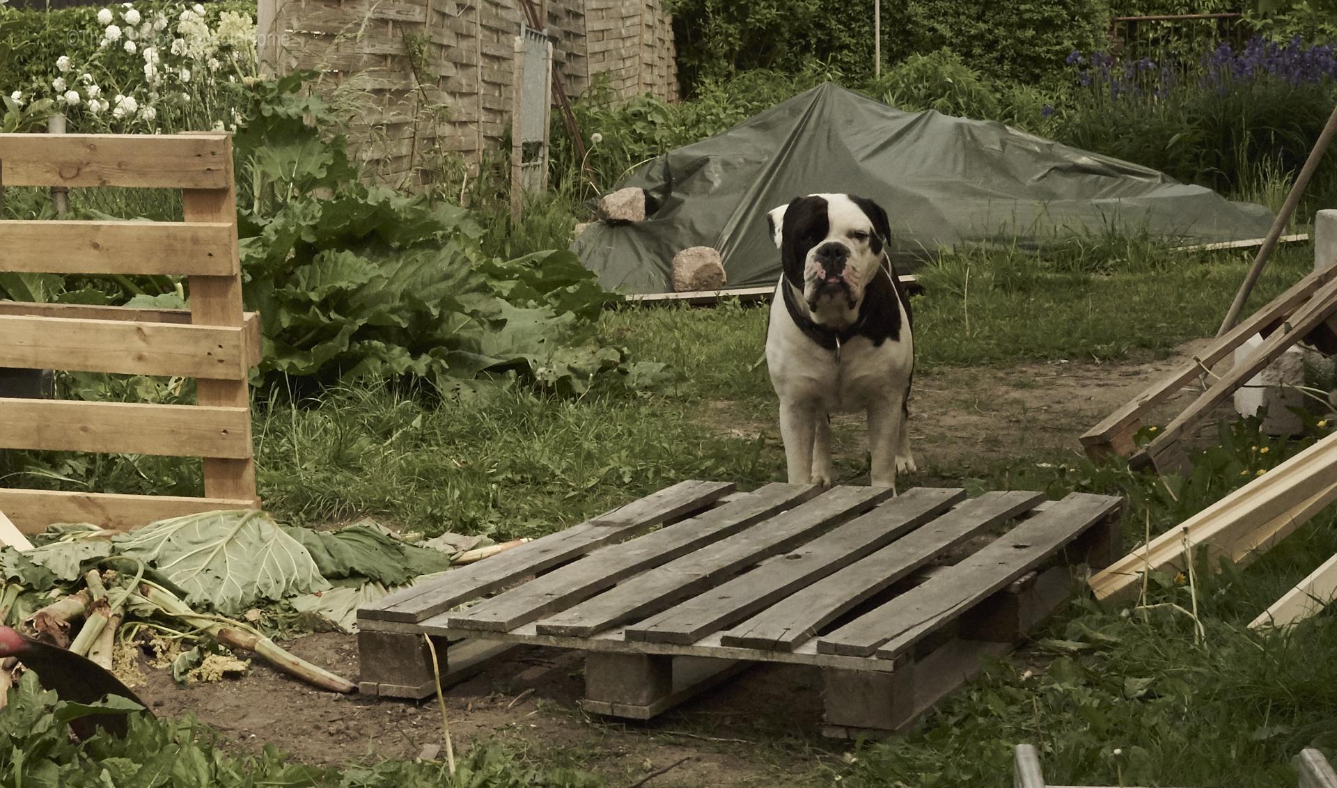 Komposter bauen geht natürlich nur wenn mann ne helfende hand ner bulldogge hat..:)