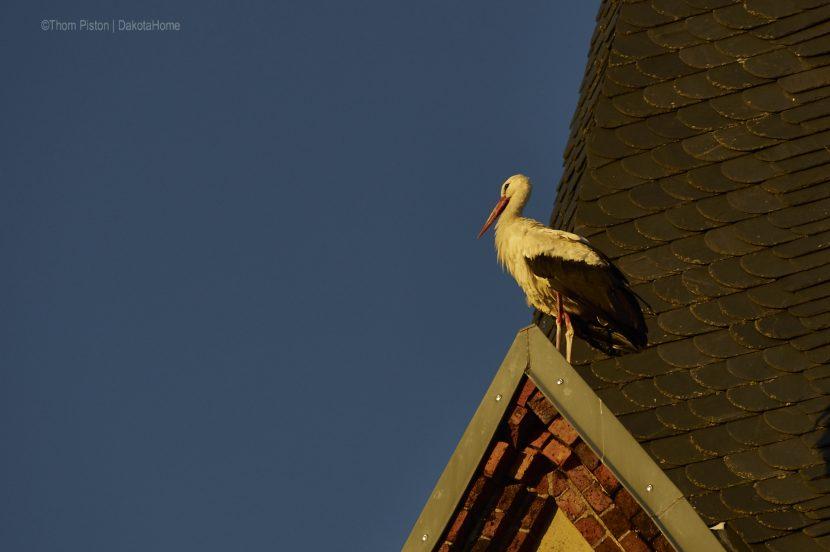 der Storch macht ma Pause