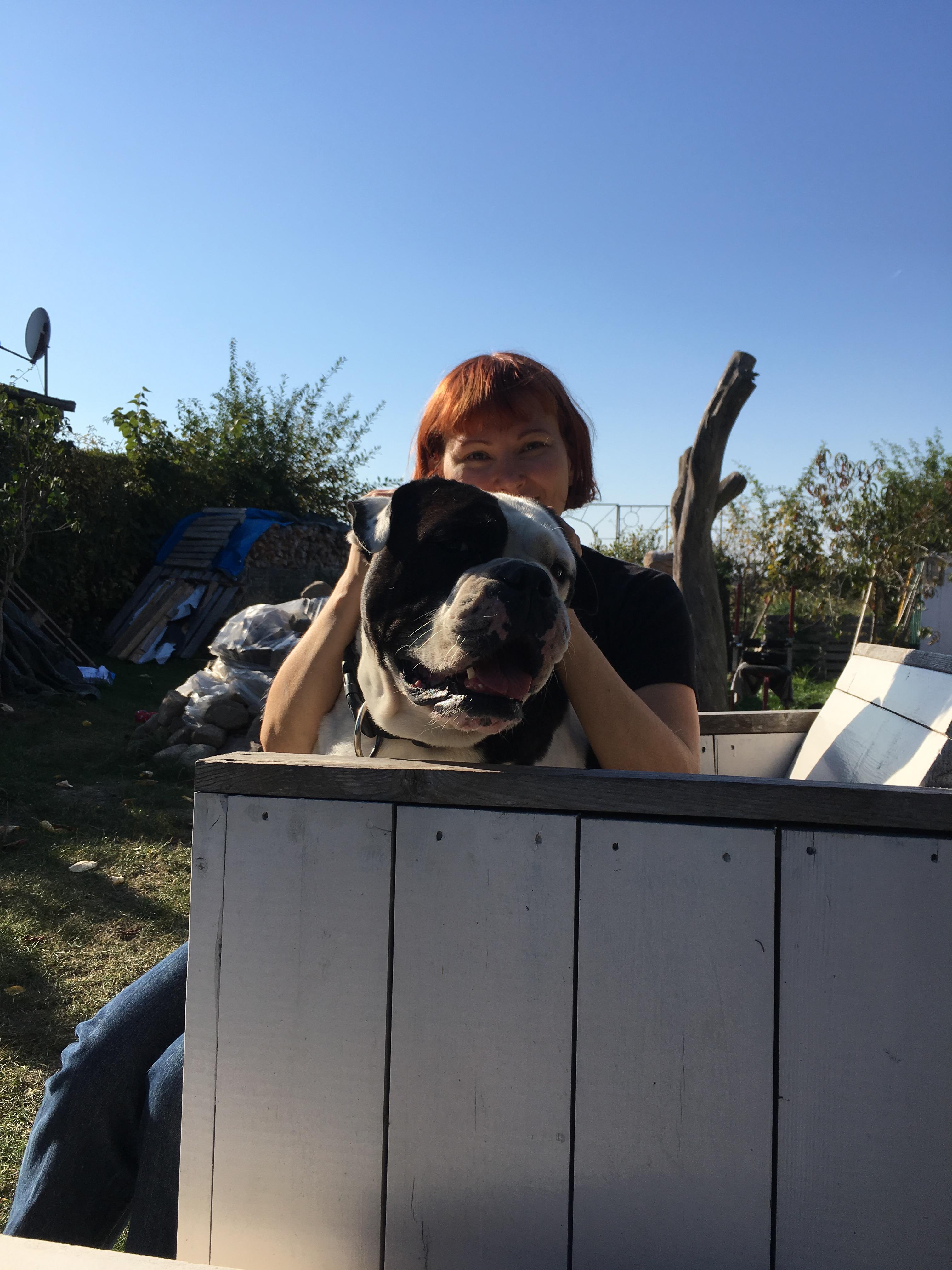 Alwin die Olde English Kuschel Bulldog
