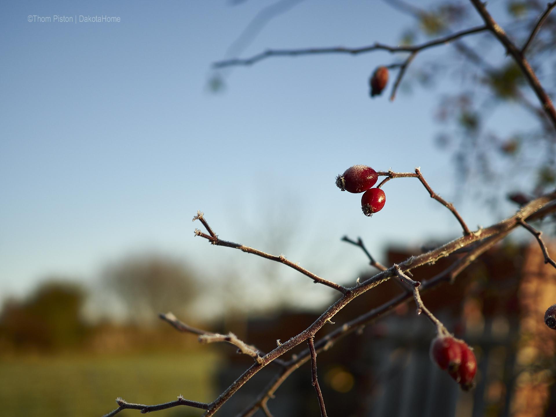 ...der erste wirkliche Frost über mehrere Tage