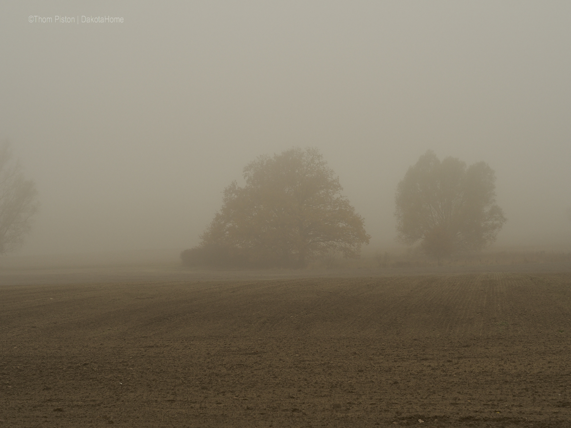 Mitte November, Nebel in Brandenburg