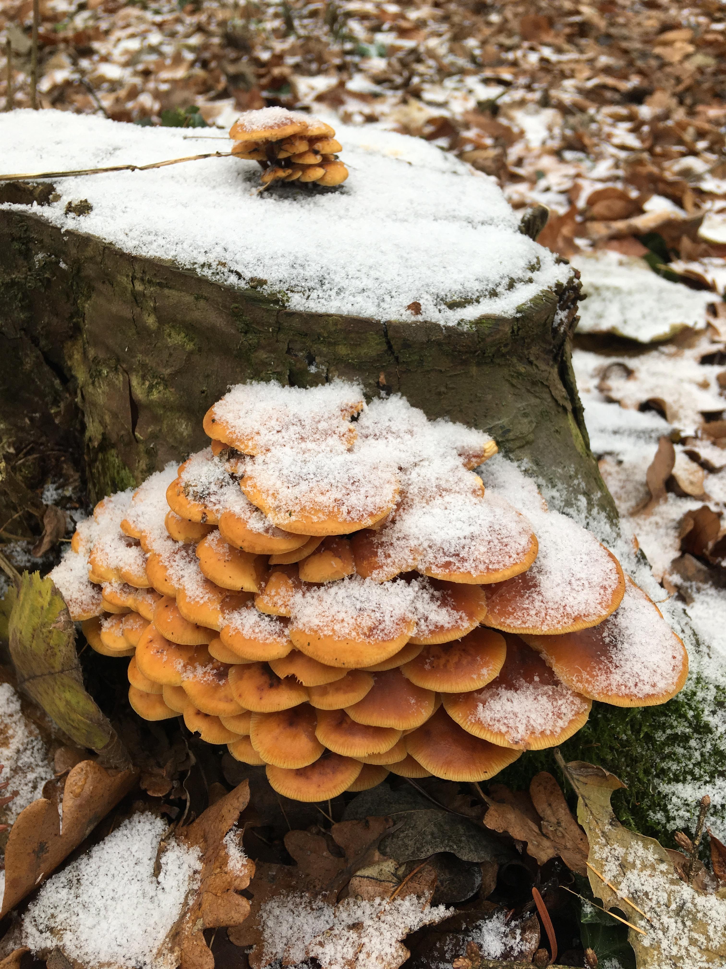 Pilze im Dezember 2018 in Brandenburg