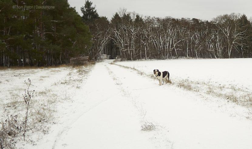 Winter, Anfang Januar 2019 at Dakota Home