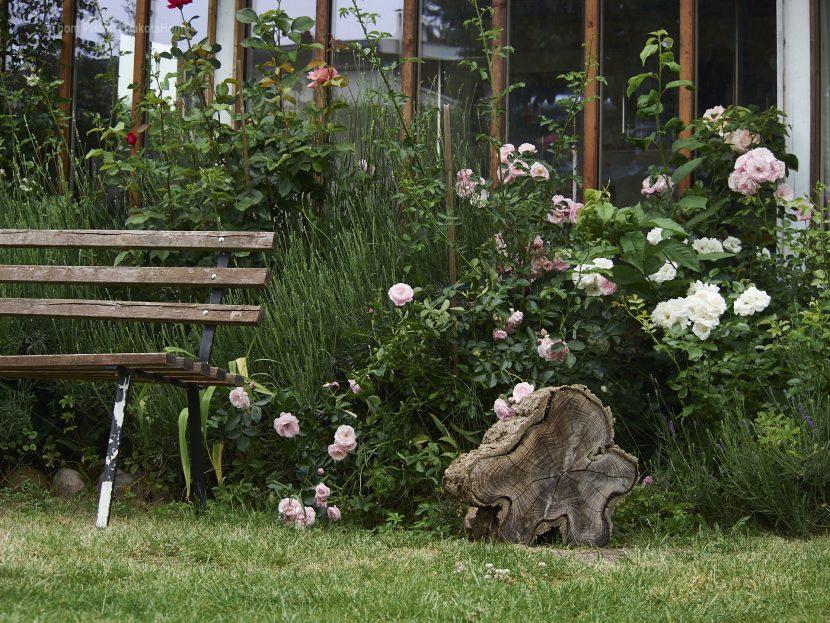 Dakota Home - zur Zeit eher n Rosengarten