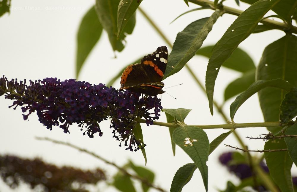 Schmetterlinge...in allen farben