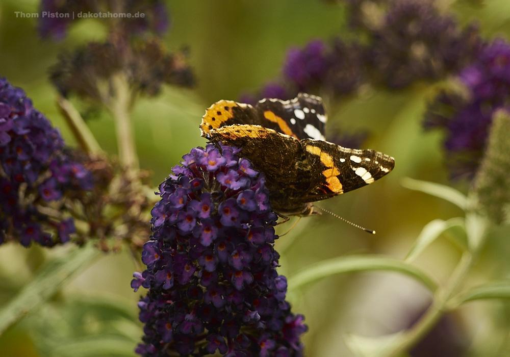 Schmetterlinge...hübsch ne?