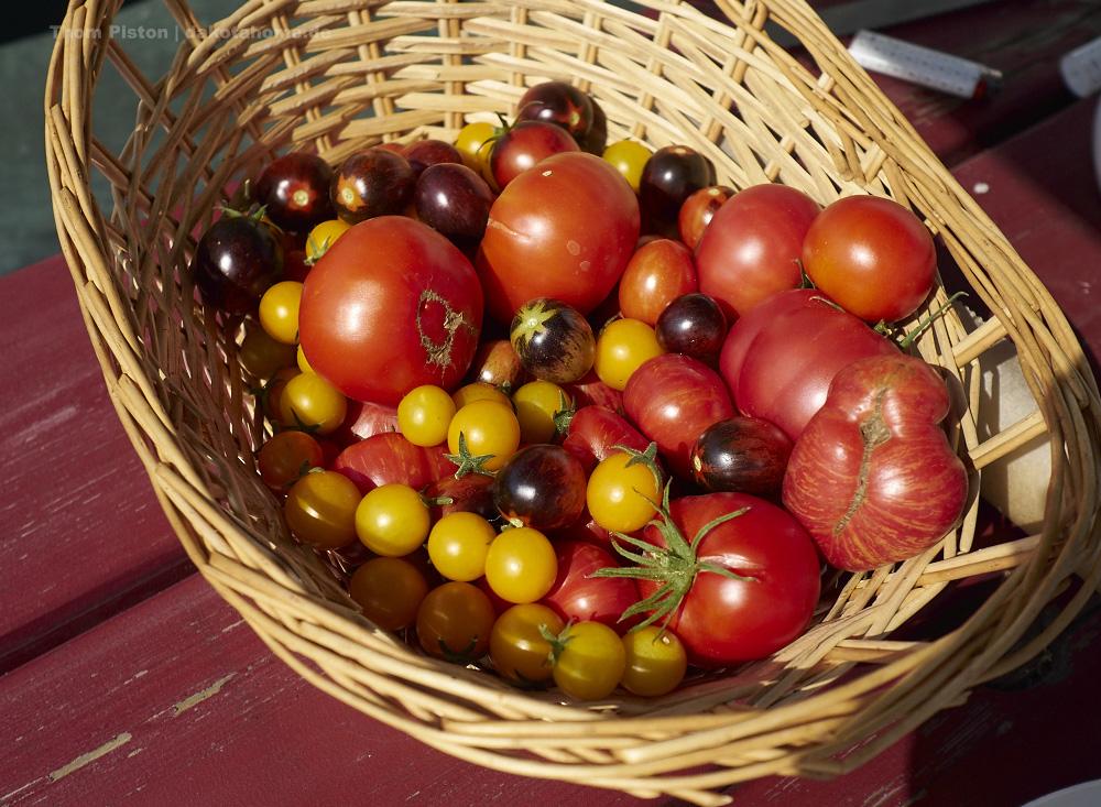 Tomaten..in 3 Tagen knapp 3 Kilo ist ok