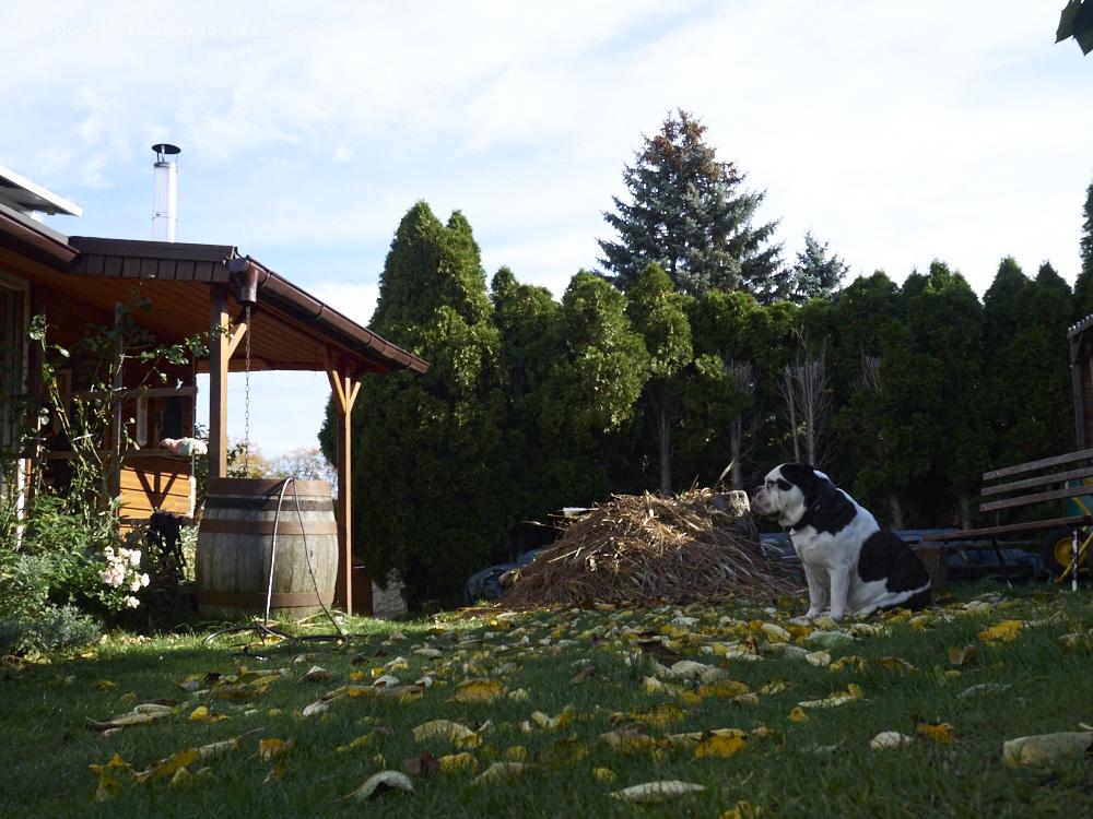 das Dakota Home in der Herbstsonne..das Schilf ist geschnitten und jeden Tag fallen 1000 Blätter oder sowas vom Kirschbaum